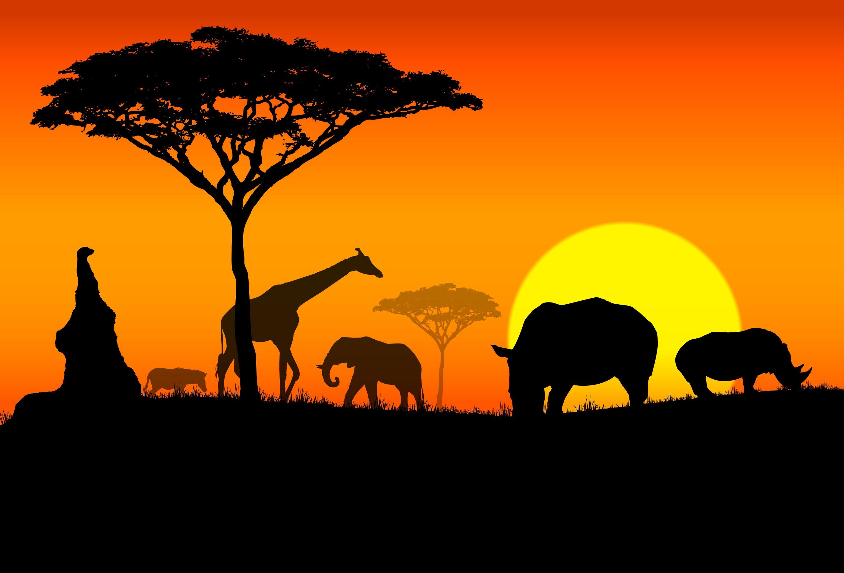 [오늘날 아프리카 이해하기2] 식민주의에서 신식민주의에 이르기까지