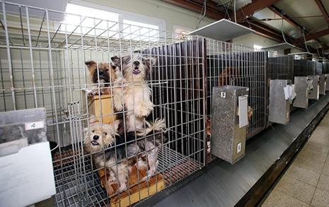 안락사인가 '고통사'인가  청주동물보호센터 논란