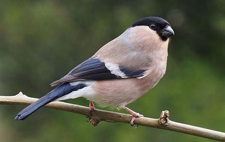 50년 동안 29억 마리 감소, 그 많던 새들은 다 어디로 갔을까
