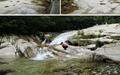문경 용추폭포와 상주 맥문동 솔숲