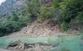 제련소 인근 소나무의 원인 모를 죽음