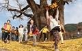 [사진] 천연기념물 은행나무와 동심