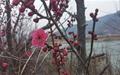 스마트 폰으로 찍은 섬진강의 봄