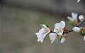 화단 앞에 핀 색색의 꽃들... 아, 이제 봄이구나