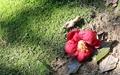 동백꽃무덤에서 생로병사의 아름다움을 보다