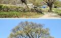 유난히 예쁜 고려산 진달래꽃