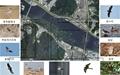 새들목섬에서 아물쇠딱다구리를 발견하다