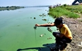 이것이 창조경제? '낙동강 녹조라떼 유람선'의 탄생