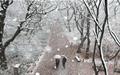 """""""와, 첫눈이다"""" 함양 천년의 숲은 하얀세상"""