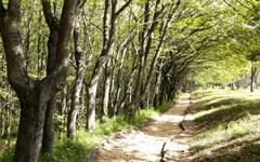 두충나무 숲길, 첫사랑 만나러 가는 기분