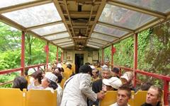 25분간의 기차여행, 종착역엔 너구리 수십 마리가