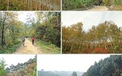 원대리 자작나무숲과 수타사 산소길