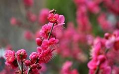 봄꽃 구경하세요