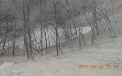 폐건축 골재로 뒤덮인 산골짜기, 금산군은 뭐하나?