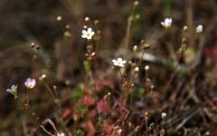 [사진] 봄맞이 꽃