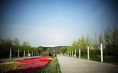 [사진] 상암동 월드컵공원의 튤립, 환상입니다