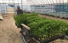 [모이] 화순 시골집 고추 모종 심는 날