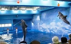 울산 남구, 고래생태체험관 존속 입장 고수