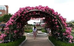 [모이] 5월은 장미의 계절