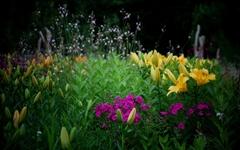 비 이슬 꽃밭을 품다