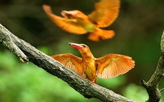 [사진] 여름철새 '호반새'의 사냥모습...'먹이 물고 위풍당당'