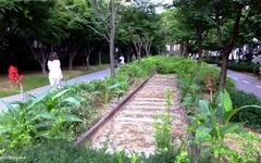 길고양이도 편히 쉬는 서울 도심 속 산책길