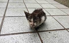 [모이] 길에서 태어난 아기 고양이의 슬픈 운명