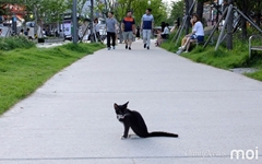 [모이] 고양이와 시민이 함께 산책하는 도심 속 공원
