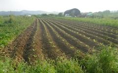 비료, 농약 없어도 농사는 잘 된다