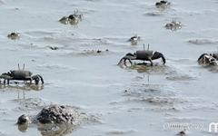갯벌을 살아 숨쉬게 하는 작은 수호자들