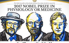 노벨 생리의학상, '생체시계' 연구한 미 과학자 3명 수상