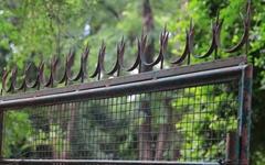 '문밖으로 나가면 죽는다'... 생사 가른 프랑스 대사관의 '철문'
