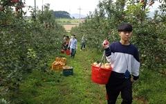 우박 피해 입은 사과농가 돕기 위해 팔 걷어붙인 대학생들