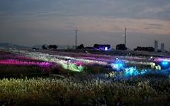 서울 억새축제 마지막날, 참 아름답습니다