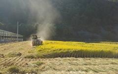 우박피해 여파로 논농사도 시름