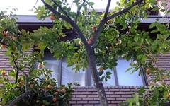 사람과 새들에게 열매를 베푸는 어머니 나무