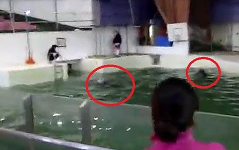 박 시장님, 돌고래 태지가 공사장에 갇혀 있어요
