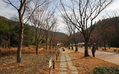 [사진] 고령 대가야 수목원에서 만난 가을 풍광