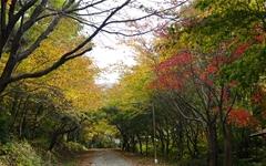 쓸쓸함이 뚝뚝 묻어나는 가을숲을 만나다