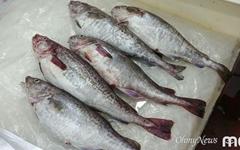 [모이] 생선이 맛있는 계절!
