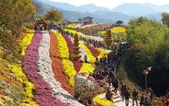 48만명 사로잡은 사랑의 꽃, 국화 앞에서