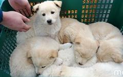 [모이] 장에서 만난 귀여운 강아지 남매