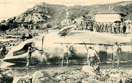 한국의 큰고래 27%가 흑산바다에서 죽었다
