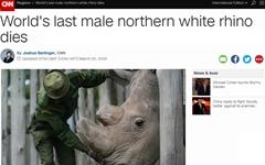 지구 마지막 북부 흰코뿔소 수컷 죽어... 사실상 '멸종'