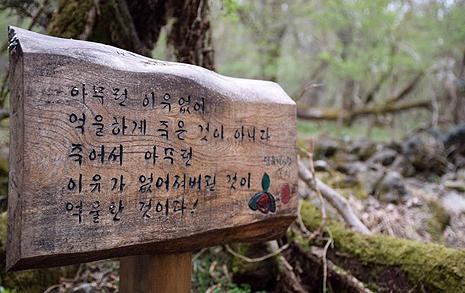 제주 사려니 숲길에서 만난 비극
