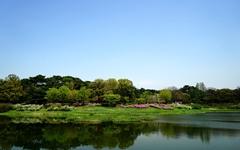 [사진] 올림픽공원의 봄 풍경