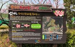 [모이] 춘덕산에서 복사꽃 한마당 즐길까요?