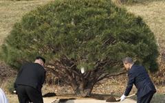 [영상] 남북한 흙과 물로 소나무 심는 문재인-김정은
