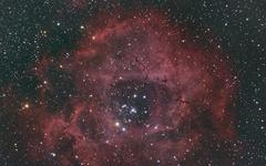 [사진] 로즈데이에 '우주에 핀 장미'를 받으세요