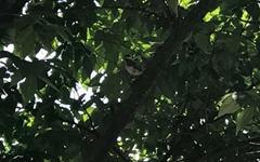[모이] 둥지를 뛰쳐나간 어린 박새, 도심의 산새가 사는 법
